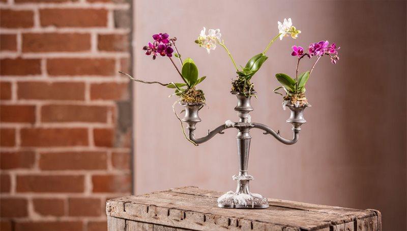 orquideas en candelabros