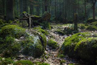 Bosques de Transilvania