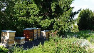 Alemania y el auge de la apicultura urbana 2