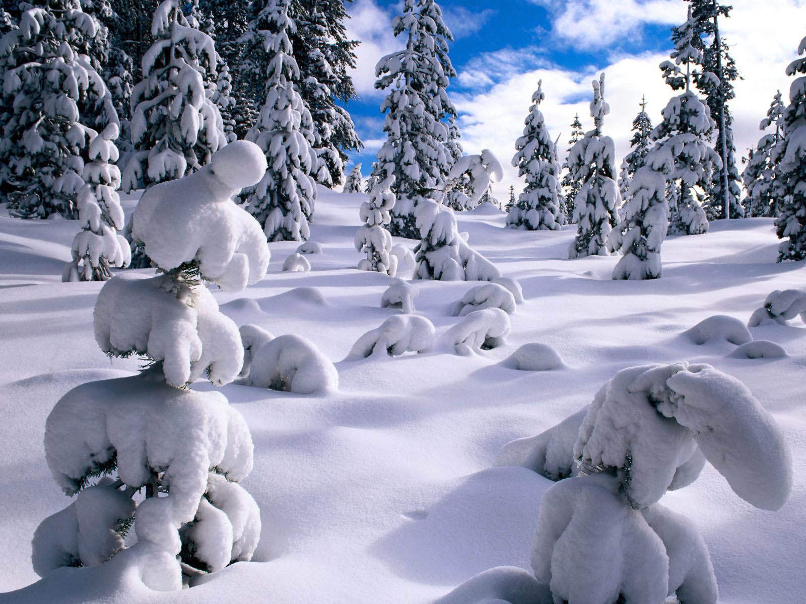Wallpapers: Winter Desktop Wallpapers And Backgrounds