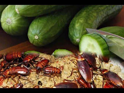 Ampuh, 9 Cara Mengusir Kecoa, Cukup Pilih Salah Satu