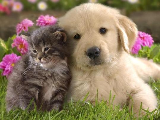 Foto Anak Anjing Lucu Dan Imut