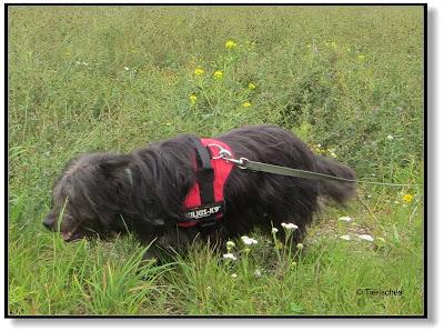die Abenteuer von Emma und Lotte, Hundeblog, Dogblog