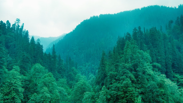 Lush green forests of Jalori jot