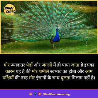 peacock in hindi
