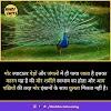 Peacock in Hindi - मोर से जुडी जानकारी और 32 रोचक तथ्य