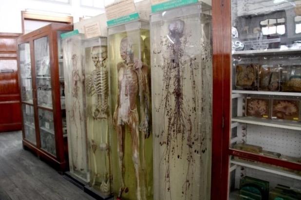 Muzium Kematian Bangkok Pamer Mayat Manusia yang Diawet