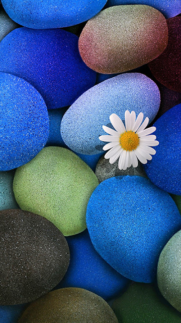 Stone Flower Wallpaper iPhone 6S Plus