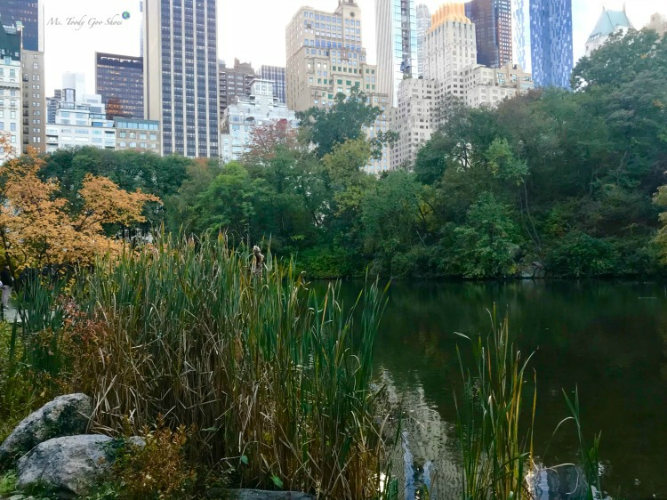 The Pond in Central Park is an oasis in the middle of New York City | Ms. Toody Goo Shoes