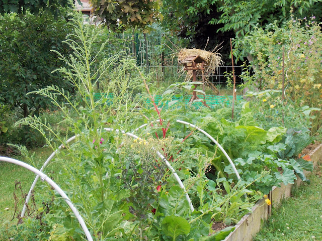 le jardin, une source de plaisirs illimités pour toute l'année