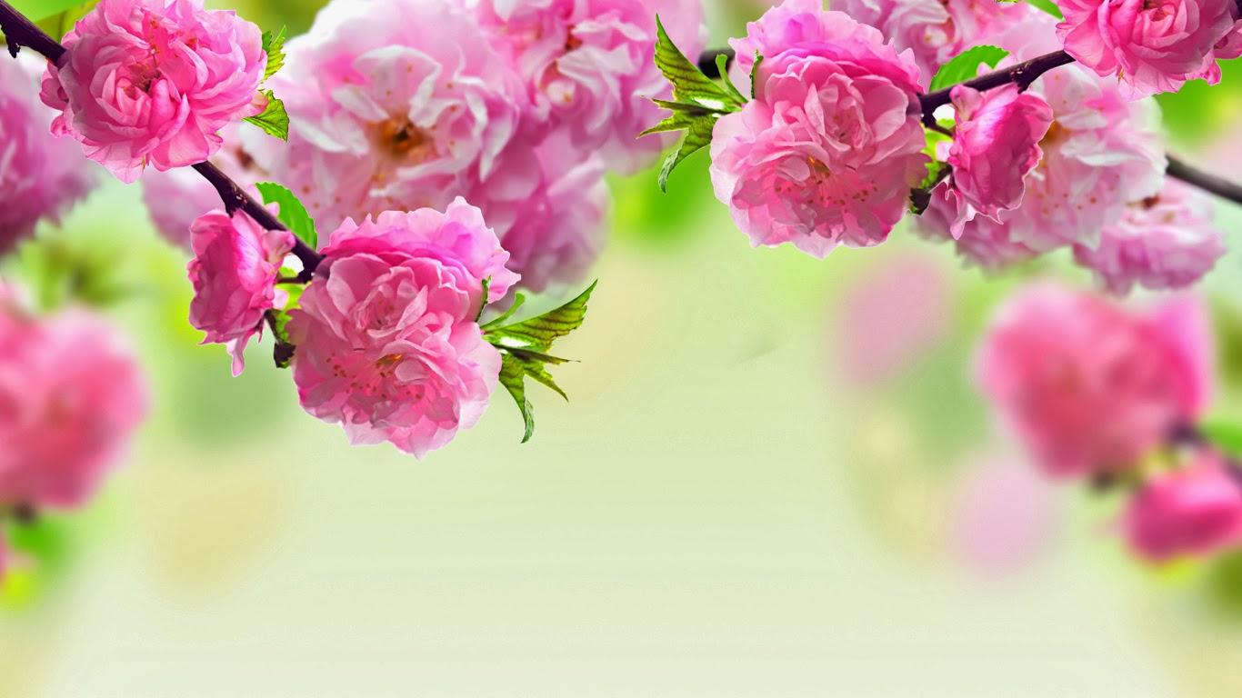 Top 40 hình ảnh hoa đào ngày tết đẹp nhất của sắc xuân