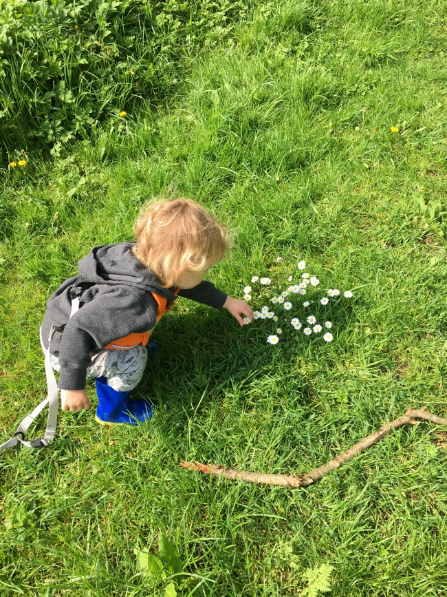 toddler picking daisy's
