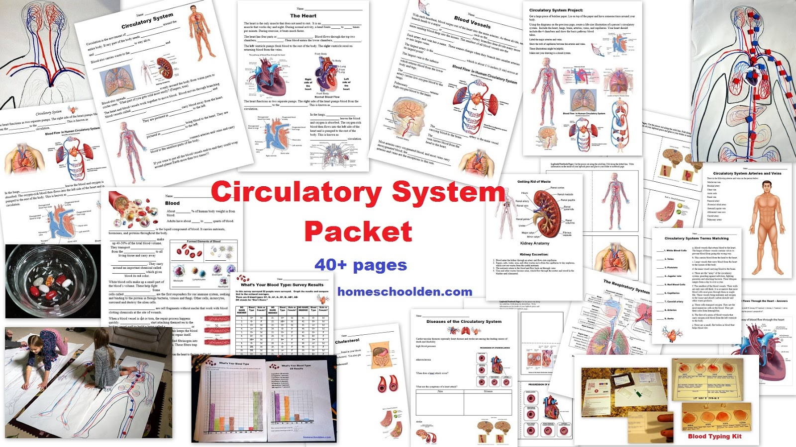 The Homeschool Den Human Body Unit Heart And Circulatory