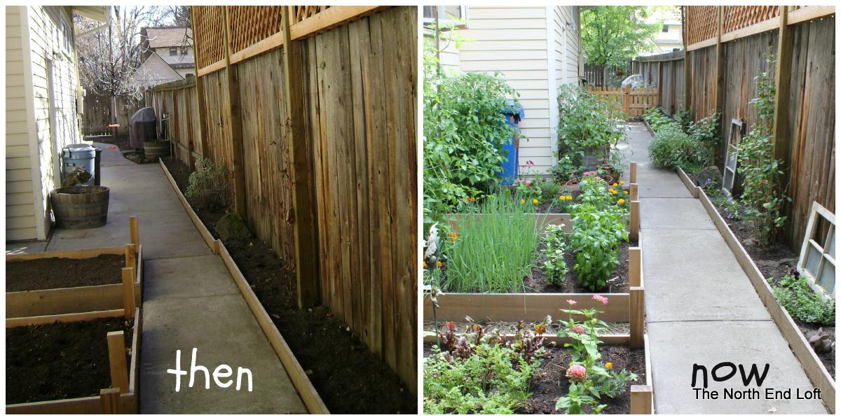 The North End Loft: My Urban Garden