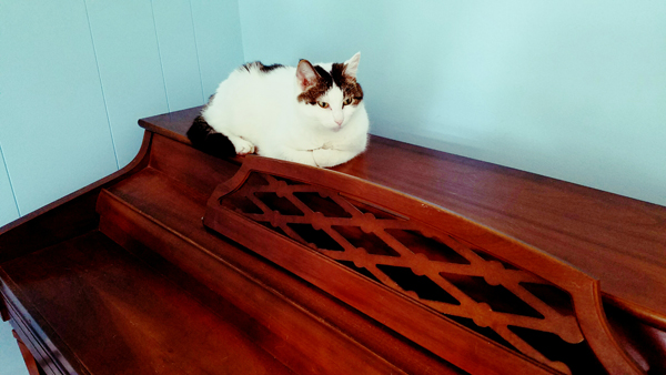 image of Olivia the White Farm Cat sitting on top of my piano