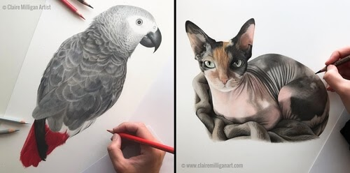 00-Claire-Milligan-Realistic-Color-Pencil-Animal-Portraits-www-designstack-co