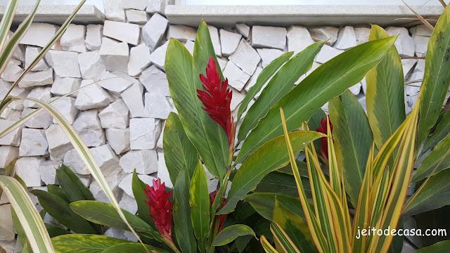 planta ornamental-jardim-tropical
