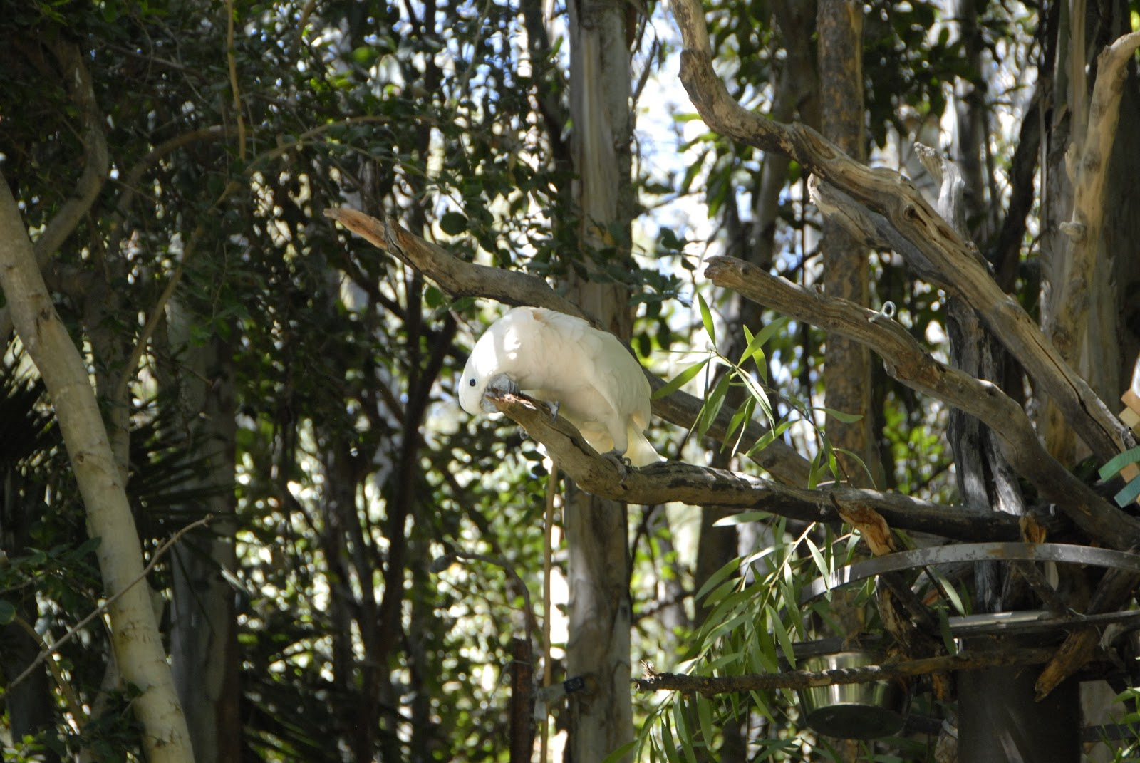 Large white parrot amidst rainforest at the Safari Park: LadyD Books