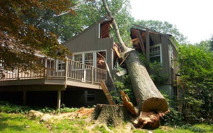 Professional guaranteed free tipsadvice on tree felling pretoria before you start chopping down a tree yourself make sure you read our tree cutting guide for some pro tips tree cutting techniques tips solutioingenieria Choice Image