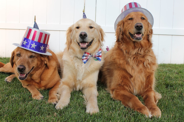 dogs dressed up for 4 of July