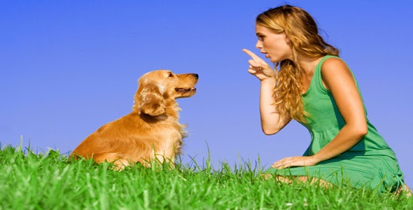 How to Train Your Dog with Hand Signals