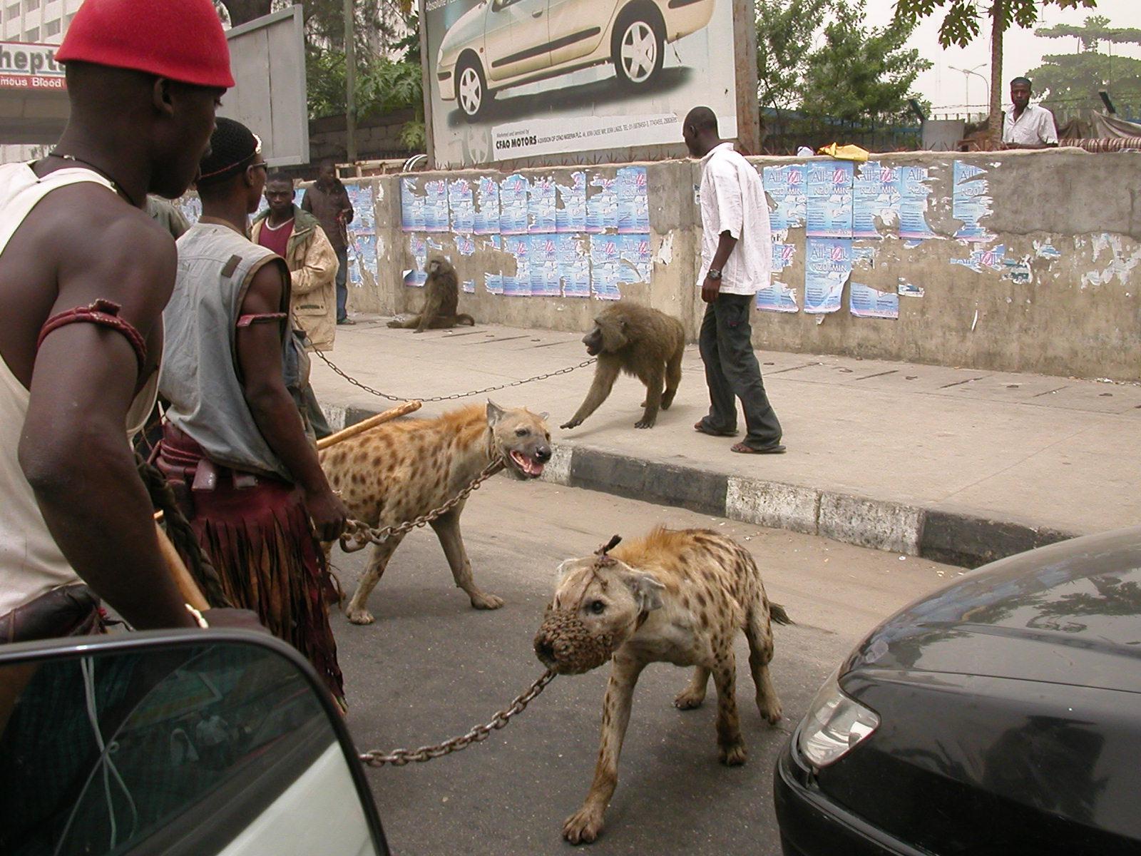 Los hombres hiena de nigeria
