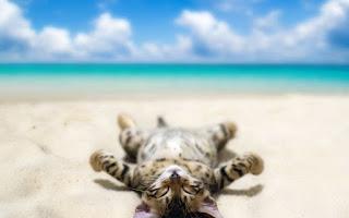 Humor de playa