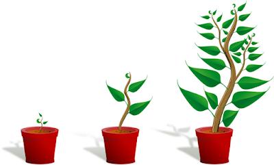 Jasa tukang taman surabaya Penyebab Pertumbuhan Tanaman Lambat