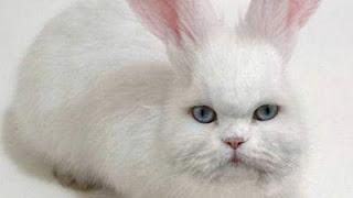 Kucing-Kucing Teraneh di Dunia