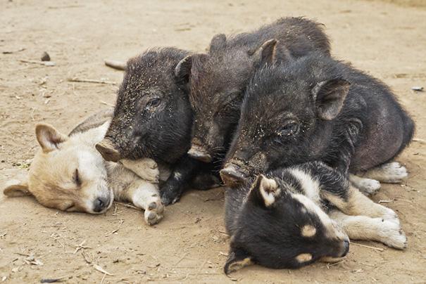 omorfos-kosmos.gr - 22 κουτάβια που δεν μπορούν να αντισταθούν στον ύπνο! (Εικόνες)