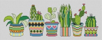 kaktus-etamin-semasi
