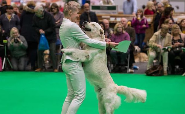 Pooches with panache at the world's biggest dog show
