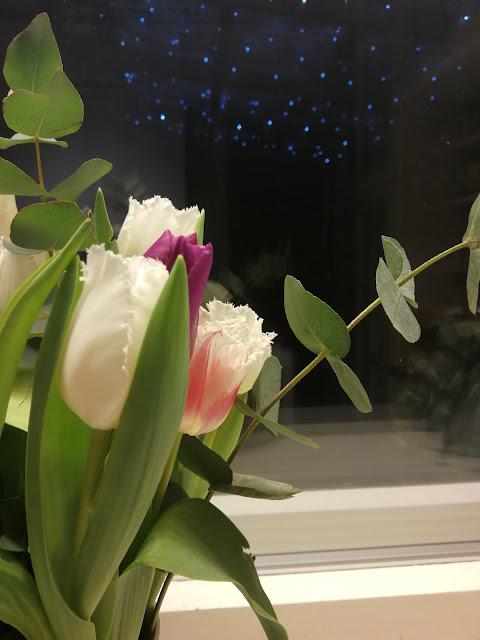 tulppaani, tulips