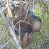 Kisah Kakek Sebatang Kara Huni Semak Belukar di Bandung Barat