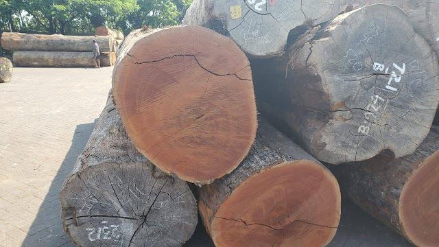 トーレム原木