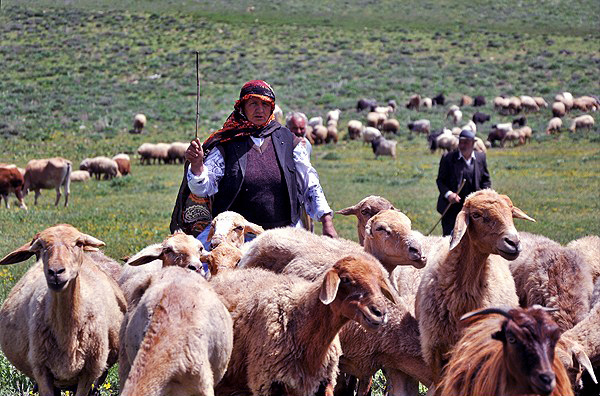 Nomads of Ghare daaq grazing the sheep.