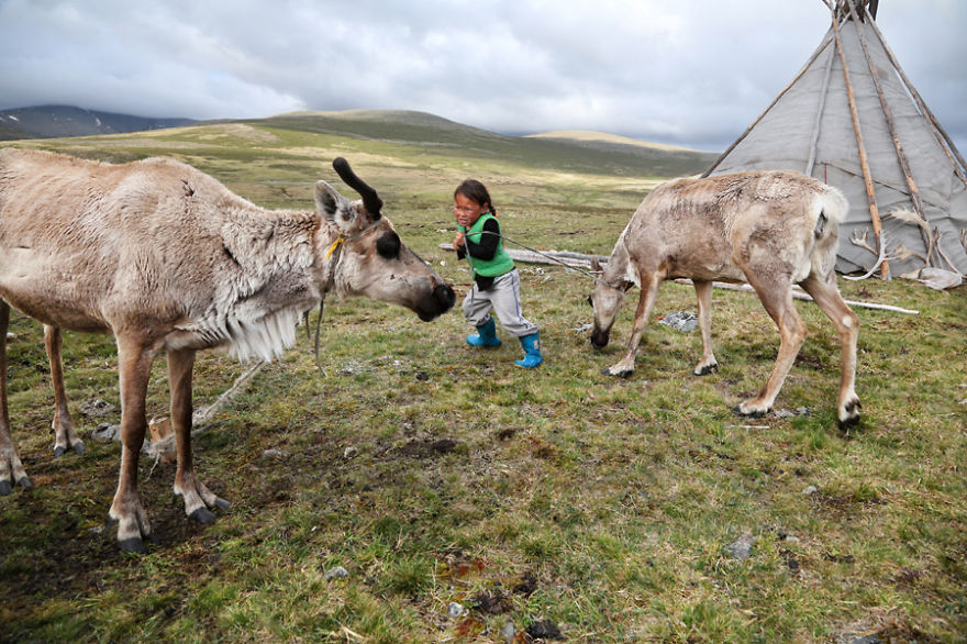 Tsaatan communities are usually a group of tents of two to seven households that move camp to find optimum grazing for the reindeer that are treated like family members and shown respect - Meet The Tsaatan Nomads In Mongolia Who Live Like No One Else
