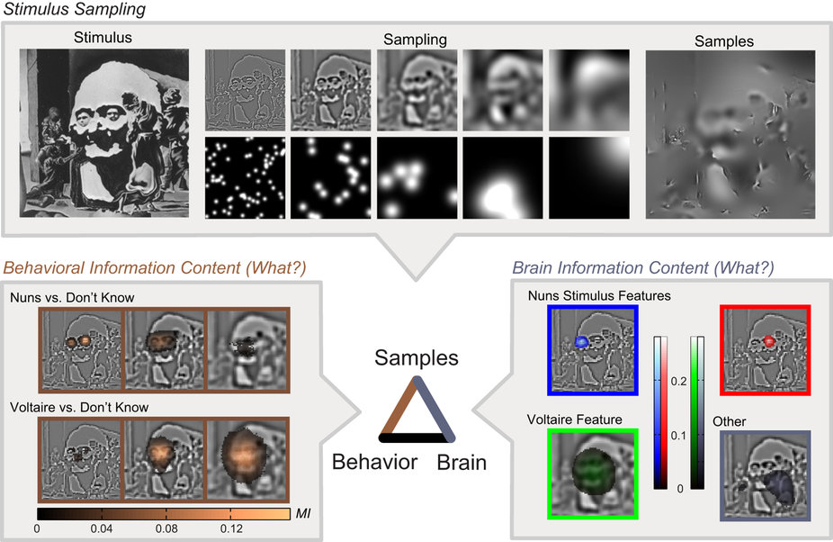 Researchers Unlock Brain's Enigma Code for Processing Visual Images