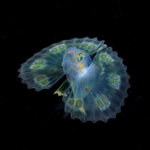Foto di Piccole creature che illuminano gli abissi