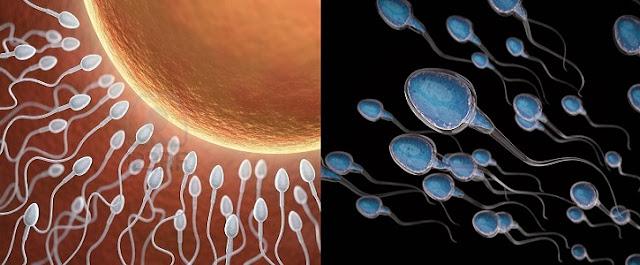 Sperm Kalitesini Artıran Yiyecekler