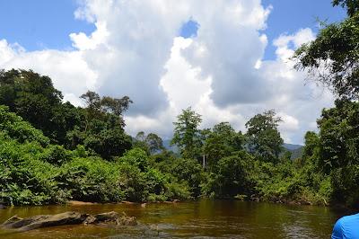 Langit biru dan Hutan hijau