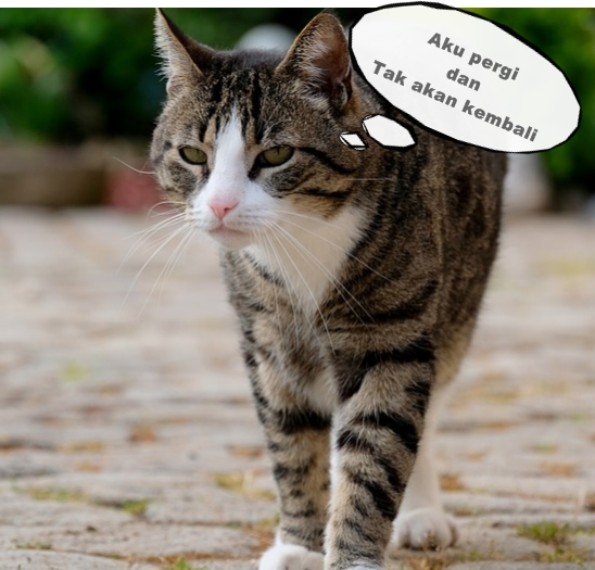 Ternyata Inilah Alasan Kita Jarang Sekali Melihat Bangkai Kucing yang Mati