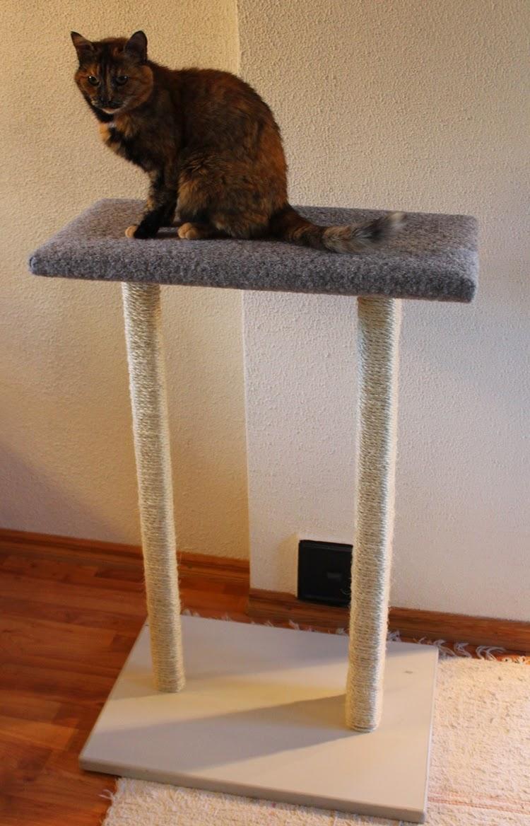 Raapimapuu Kissalle