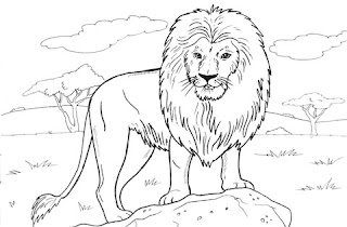 Wild African Lion For Coloring