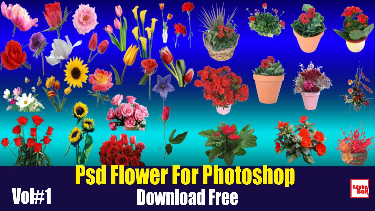 Psd Flower For Photoshop Vol#1 - Adobe BoX