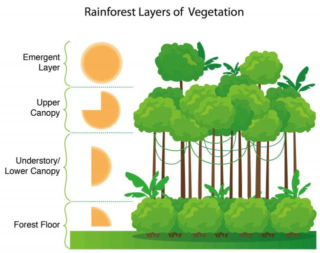 what is the relationship between deforestation and photosynthesis