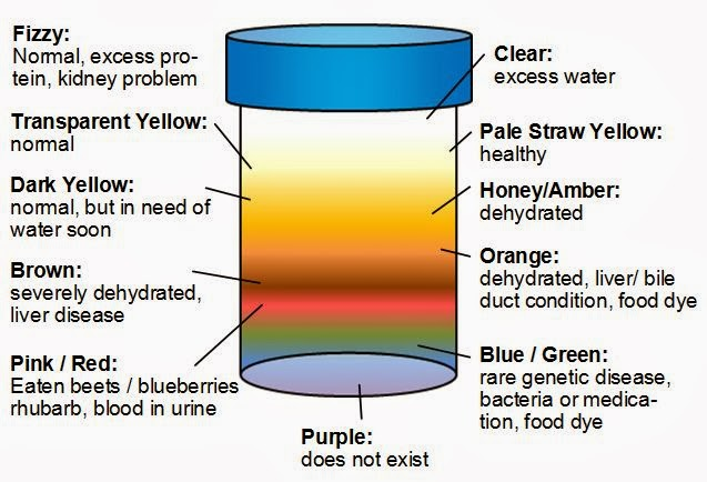 Urine Color Chart Meaning