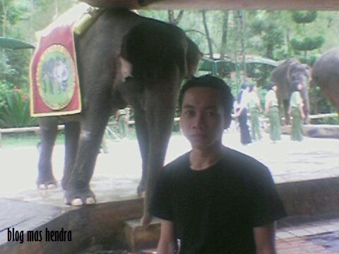 Berpose Bersama Gajah Windy - Blog Mas Hendra