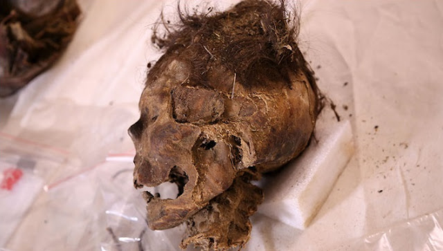 Medieval Mongolian woman died after massive blow to head