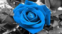 La rosa azul, en la era de las ciencias de la complejidad, Francisco Acuyo
